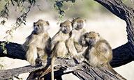 Sud Africana en formule surKlassée - Extension aux chutes Victori