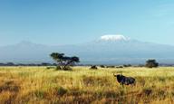Tanzanie de savanes en plages - voyage  - sejour