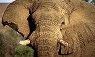Safari dik dik - voyage  - sejour