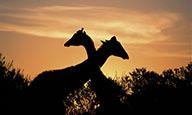 L'Afrique du Sud grand format - extension aux chutes Victoria