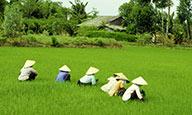 Douceurs vietnamiennes en formule surKlassée